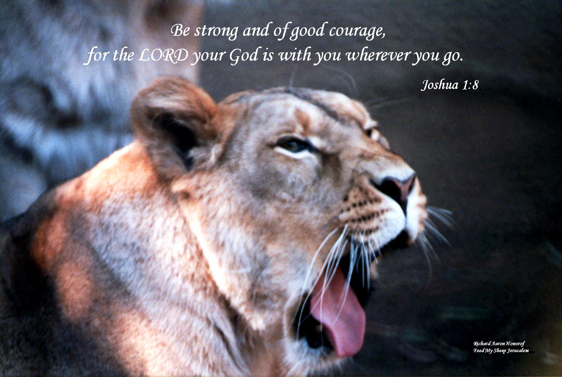 Lioness: Be strong and of good courage, for the LORD your God is